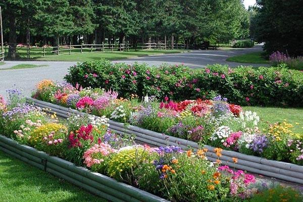 گلهای پارک روزولت اینترنشنال استان نیوبرانزویک کانادا