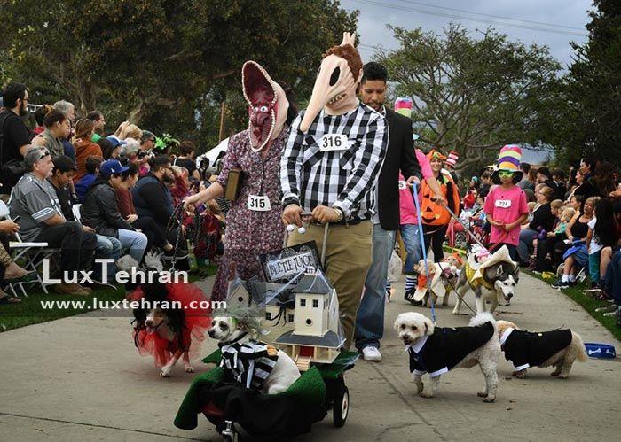رژه سگ ها در مراسم کالیفرنیا جشن هالووین