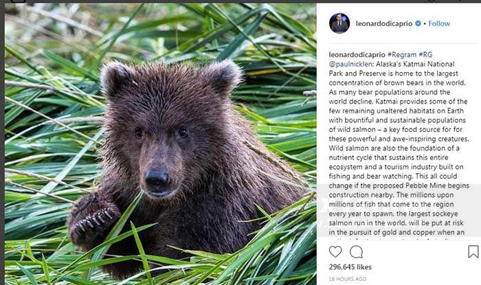 توضیحاتی از اینستانوشته جدید دی کاپریو درباره حفاظت از خرس قهوه  ای